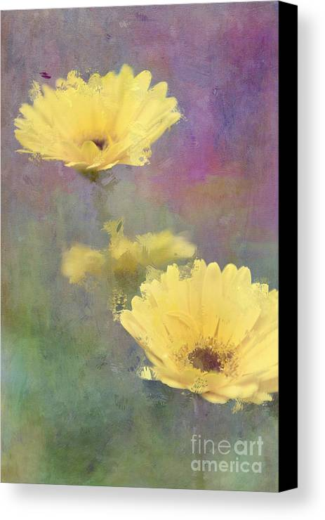 Gerbera Daisy Canvas Print featuring the photograph Happy Faces by Betty LaRue