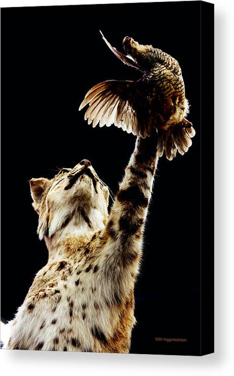 Bobcat Canvas Print featuring the photograph He Got Away by DiDi Higginbotham