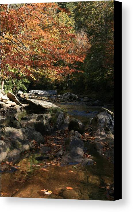 Fall Canvas Print featuring the photograph It's Definitely Fall by Danean Ermentrout