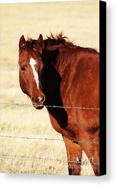 Alberta Canvas Print featuring the photograph Just Me And My Shadow by Alyce Taylor