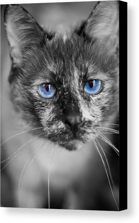 Siamese Canvas Print featuring the photograph Miss Nermal by Kittysolo Photography