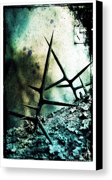 War Canvas Print featuring the photograph Mortal Combat by Judi Bagwell