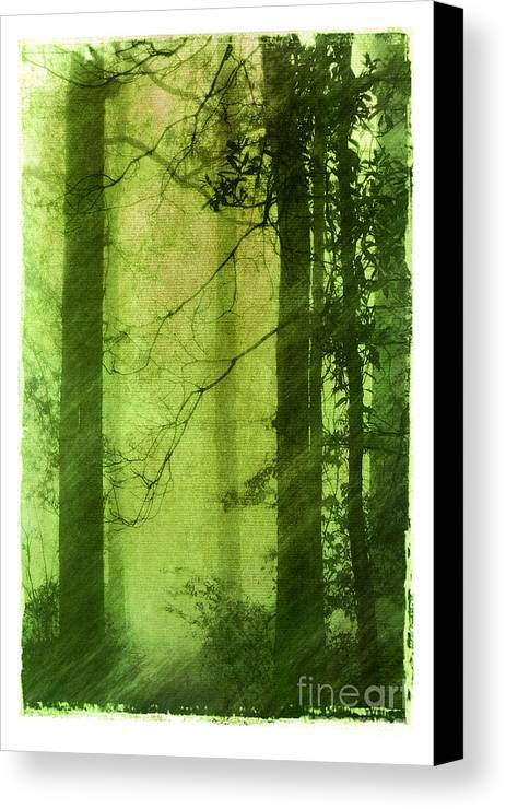 Green Canvas Print featuring the photograph Mystical Glade by Judi Bagwell