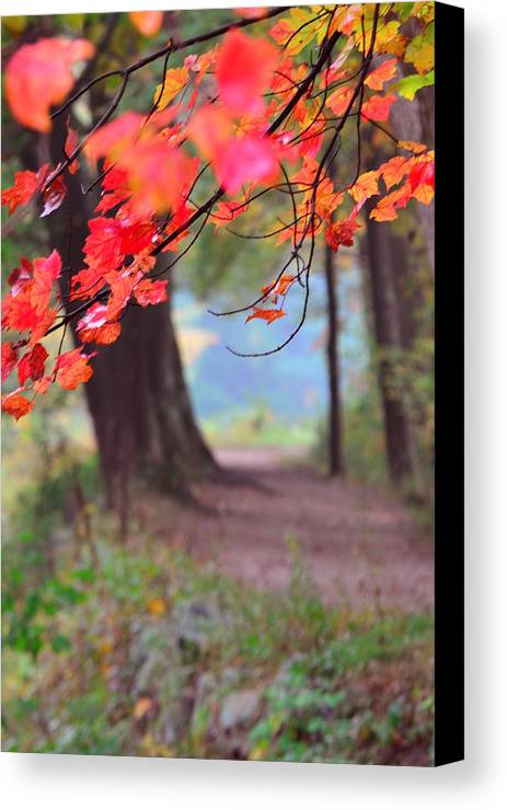 Fall Canvas Print featuring the photograph October Walk by Mandi Howard