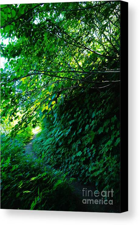 Leaves Canvas Print featuring the photograph Pathway by Jeff Swan