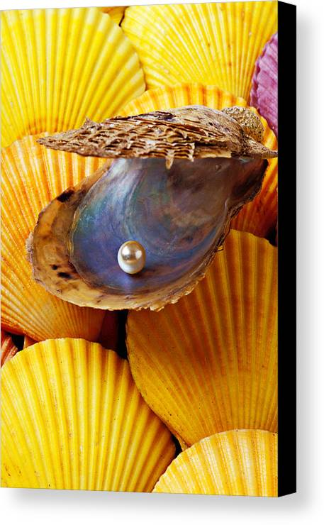 Pearl Canvas Print featuring the photograph Pearl In Oyster Shell by Garry Gay