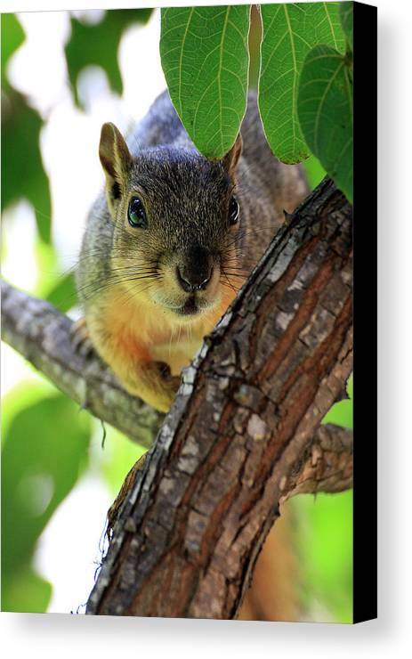 Canvas Print featuring the photograph Peekaboo by Stephen Dennstedt
