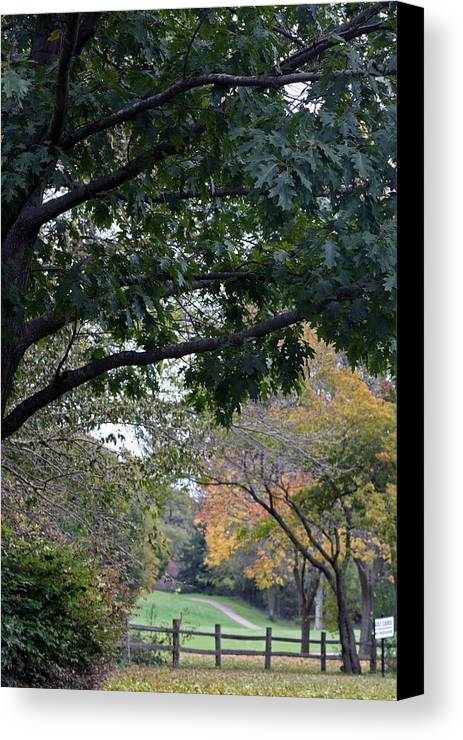 Nature Canvas Print featuring the photograph Petrifying Springs Golf Course by Kay Novy