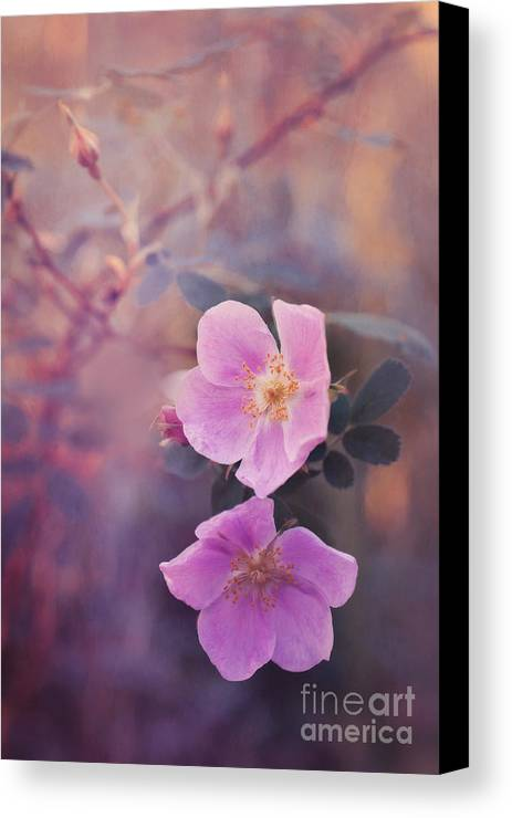 Rosa Acicularis Canvas Print featuring the photograph Prickly Rose by Priska Wettstein