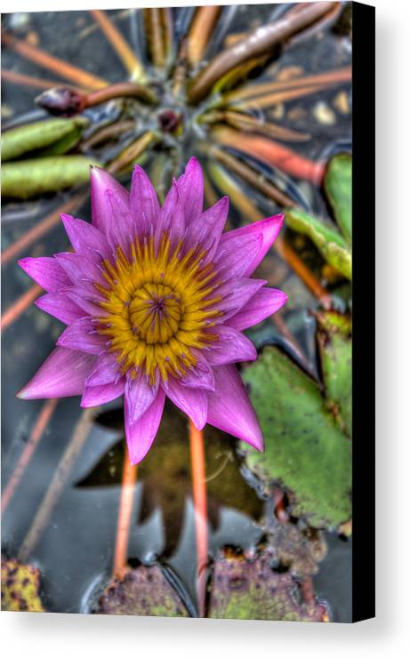 Purple Canvas Print featuring the photograph Rise And Shine by Photo Enrichments