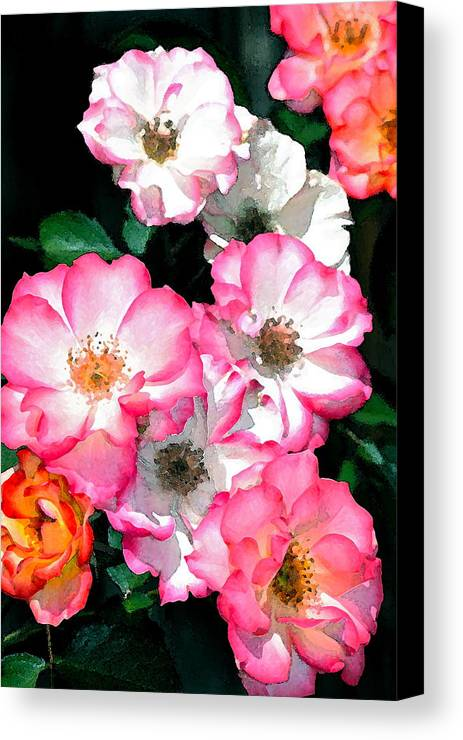 Floral Canvas Print featuring the photograph Rose 133 by Pamela Cooper