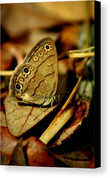 Butterfly Canvas Print featuring the photograph Rustic by David Weeks