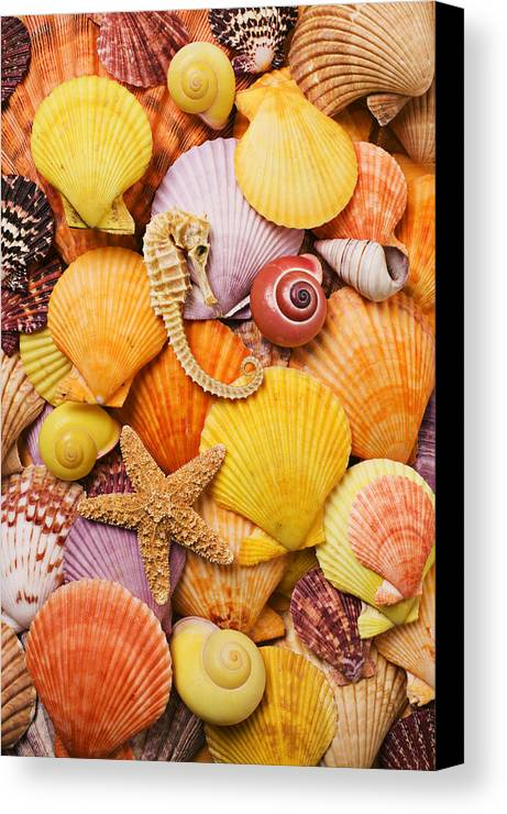 Sea Shells Starfish Canvas Print featuring the photograph Sea Horse Starfish And Seashells by Garry Gay
