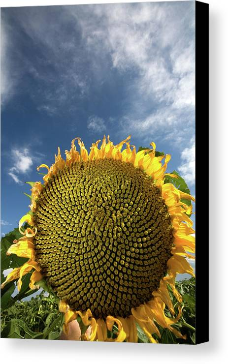 Clouds Canvas Print featuring the photograph Smiling Face by Peter Tellone