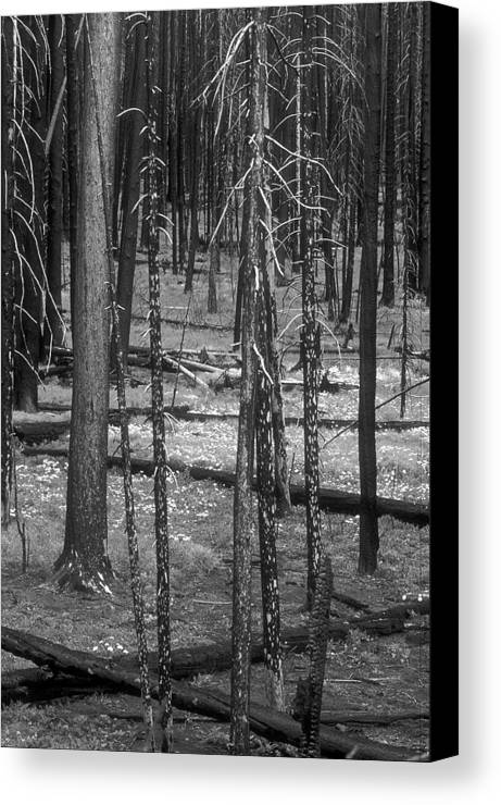 Canvas Print featuring the photograph Recovery by Sandra Bronstein
