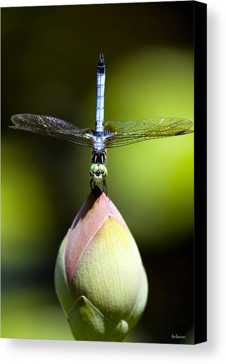 Insects Canvas Print featuring the photograph T Shape by Lisa Spencer