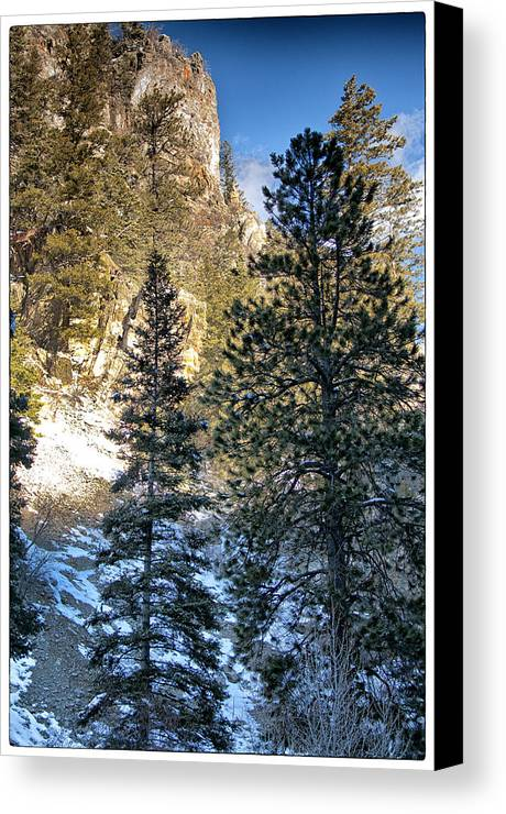 Mountain Canvas Print featuring the photograph Tall Trees by Lisa Spencer