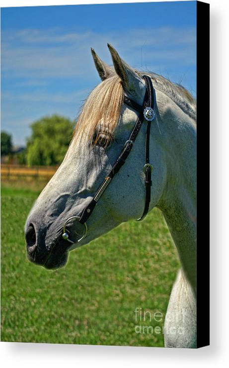 Horse Canvas Print featuring the photograph Tessa by Dawn Harris