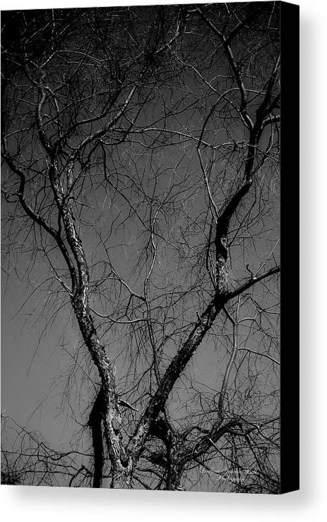 Tree Canvas Print featuring the photograph The Widow Tree by Darlene Bell