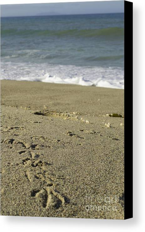 Beach Canvas Print featuring the photograph Trail To The Beach by Patty Descalzi
