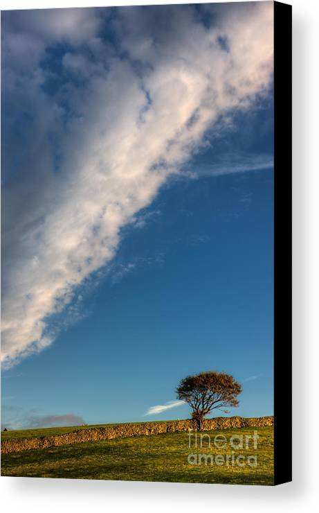 Snowdonia Canvas Print featuring the photograph Tree On A Hill by Rory Trappe