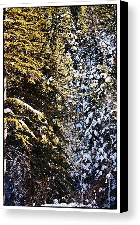 Nature Canvas Print featuring the photograph Trees In Taos Village by Lisa Spencer