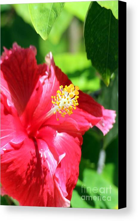 Flower Canvas Print featuring the photograph Vanity by Sophie Vigneault