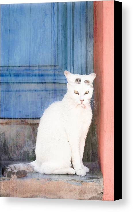 Animal Canvas Print featuring the photograph White Cat by Tom Gowanlock