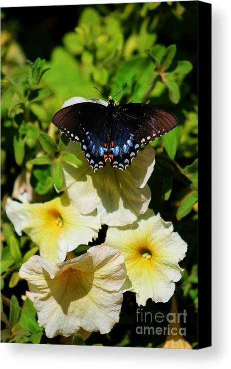 White Flower Canvas Print featuring the photograph White Flower Butterfly by Tiffani Vanhunnik