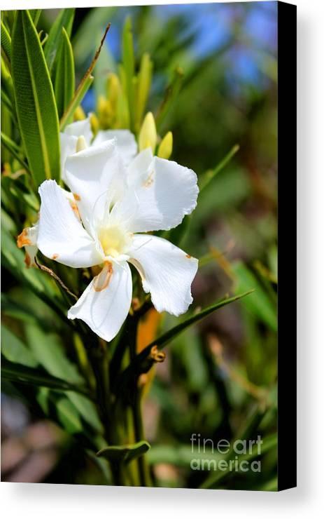 Flower Canvas Print featuring the photograph White Flower by Tiffani Vanhunnik