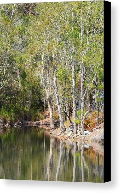 Australian Bush Canvas Print featuring the photograph White Reflections by Paul Riemer