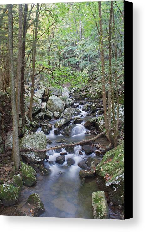 Stream Canvas Print featuring the photograph Winding Stream by David Troxel