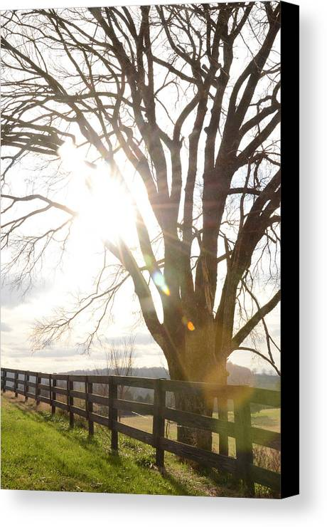 Field Canvas Print featuring the photograph Winter At Greenrise by Victoria Lawrence