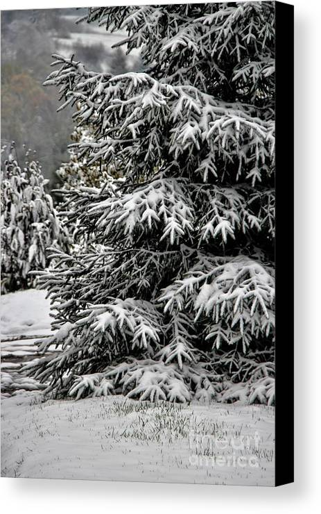 Winter Solstice Canvas Print featuring the photograph Winter Solstice by Mariola Bitner