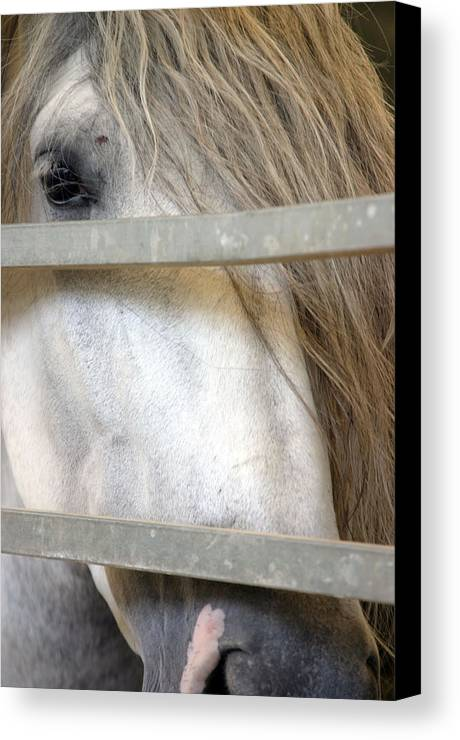 Photographer Canvas Print featuring the photograph Barred by Jez C Self