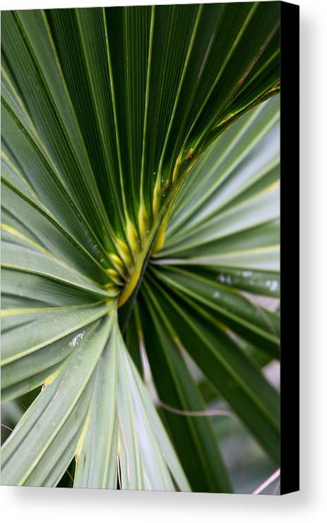 Fern Canvas Print featuring the photograph Green Fan by Kenna Westerman