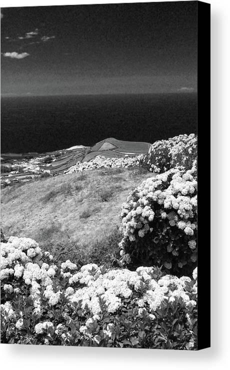 Landscape Canvas Print featuring the photograph Landscape With Hydrangeas by Gaspar Avila