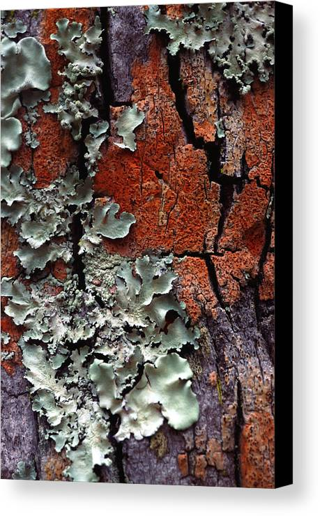 Vertical Canvas Print featuring the photograph Lichen On Tree Bark by John Foxx
