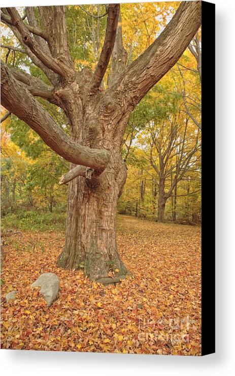Fall Canvas Print featuring the photograph Odiorne Point State Park - Rye New Hampshire by Erin Paul Donovan