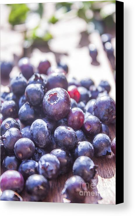 Organic Canvas Print featuring the photograph Picking Huckleberries by D R
