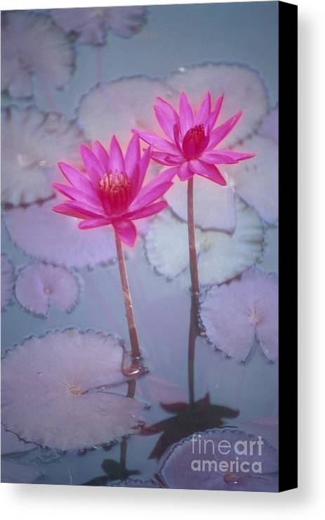 Anther Canvas Print featuring the photograph Pink Lily Blossom by Ron Dahlquist - Printscapes