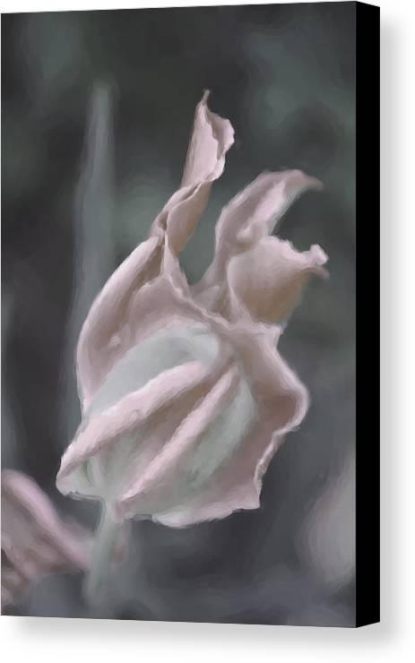 Tulip Canvas Print featuring the digital art Ruffled Pink Tulip by Susan Lipschutz