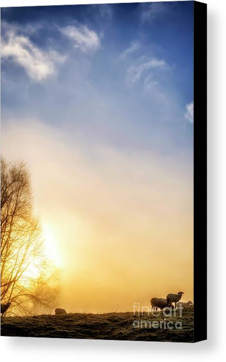 Sunrise Canvas Print featuring the photograph Misty Mountain Sunrise by Thomas R Fletcher