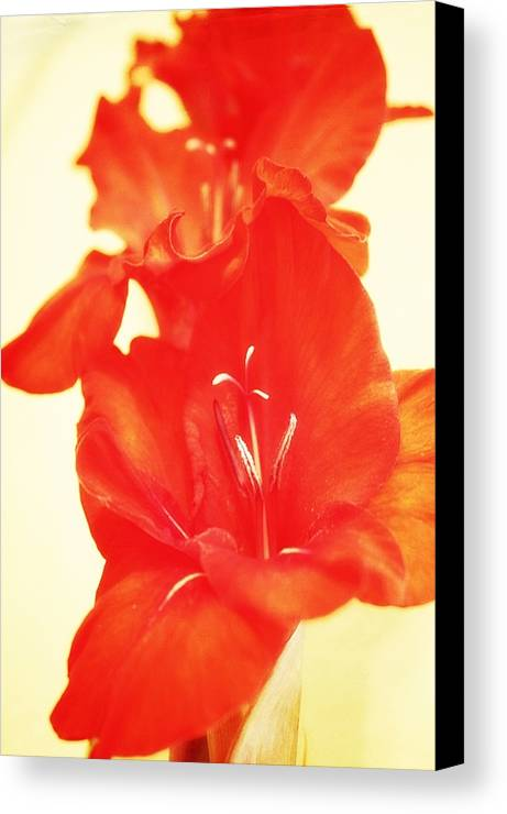 Canvas Print featuring the photograph Gladiola by Cathie Tyler
