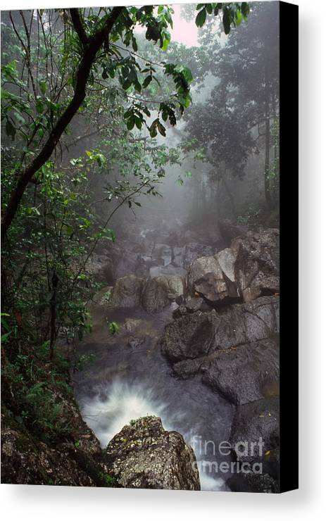 Puerto Rico Canvas Print featuring the photograph Misty Rainforest El Yunque by Thomas R Fletcher
