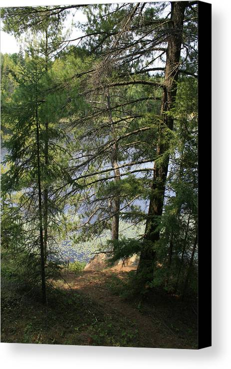 Photography Canvas Print featuring the photograph A Place To Wander by Alan Rutherford