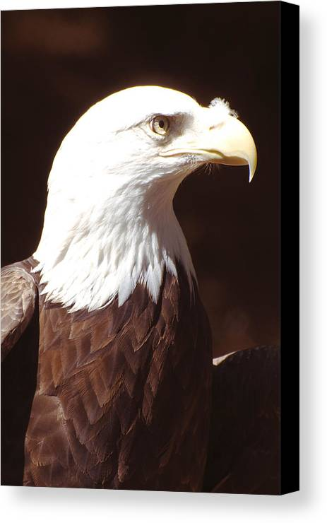 Eagle Canvas Print featuring the photograph American Bald Eagle by Richard Henne
