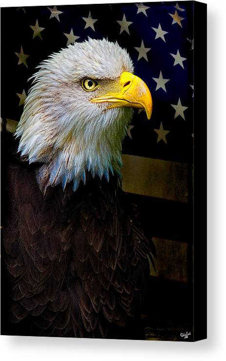 Eagle Canvas Print featuring the photograph An American Icon by Chris Lord