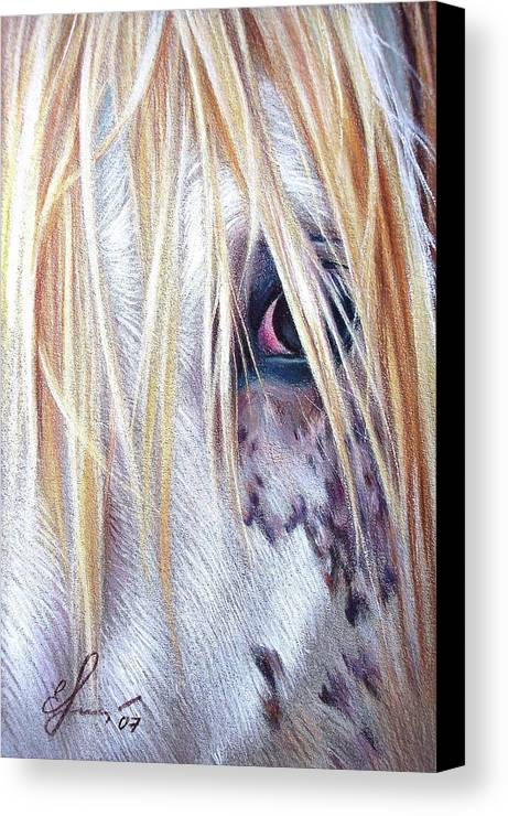 Appaloosa Canvas Print featuring the drawing Appaloosa by Elena Kolotusha