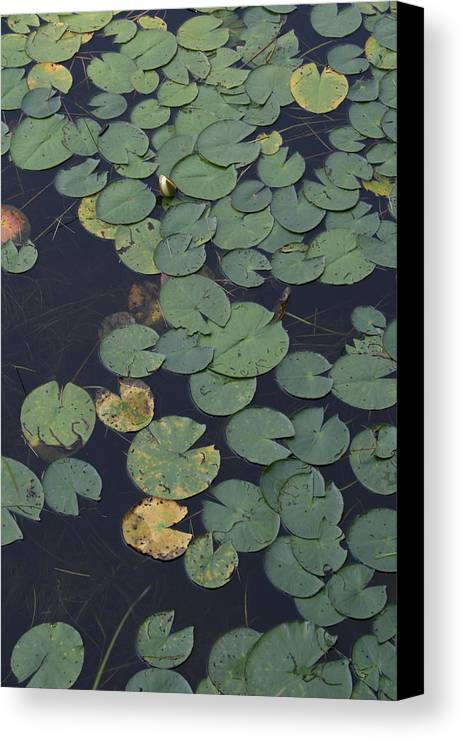 Wild Flowers Canvas Print featuring the photograph Approaching Lilly by Alan Rutherford